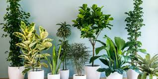 indoor plants india bring home top 12 air purifying plants in india credihealth