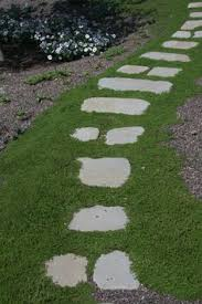 Backyard Ground Cover Options Gallery For U003e Woolly Thyme Ground Cover Stepping Stones