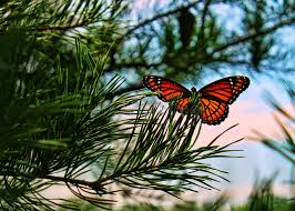 monarch butterfly up stock image image of macro 38695653