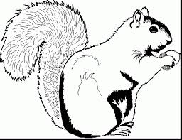 wonderful squirrel monkey coloring pages with squirrel coloring