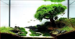 java moss care tips moss carpets moss trees aquarium info