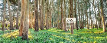 Eucalyptus Trees San Francisco Presidio Large Format Fine Art Photo Prints Vast