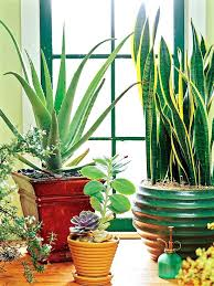 house plants no light elegant indoor plants that like low light for houseplants you cant