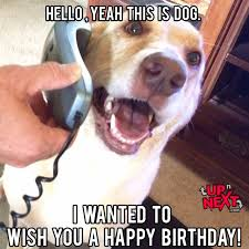 Birthday Dog Meme - funny happy birthday pictures and quotes for guys friends cousins