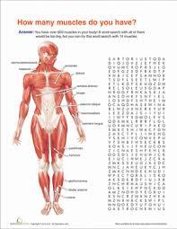 muscle anatomy worksheet education com