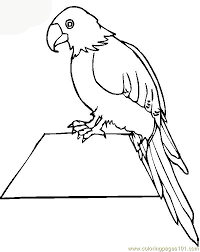 impressive parrot coloring pages nice coloring 1704 unknown