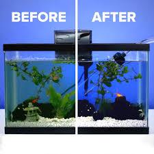 best 25 axolotl tank ideas on plant fish tank fish