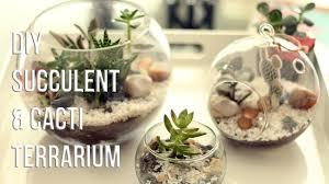 how to make succulents u0026 cacti terrarium diy cómo hacer un