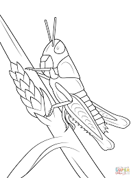free printable grasshopper coloring pages to print u2013 barriee
