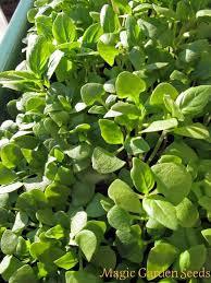 les herbes de cuisine kit de semences herbes de cuisine pour le rebord de fenêtre