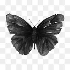 black butterfly png images vectors and psd files free
