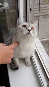 Cats In Small Spaces Video - youtube video shows a cat who just can u0027t stop staring but no one