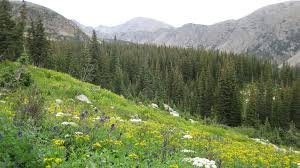 Colorado Gmu Map by Elk Hunting In Colorado U0027s Gmu 29 Boulder Jefferson And Gilpin