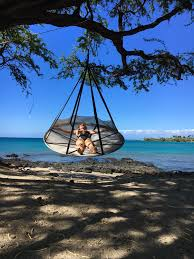 Tree Hanging Hammock Chair Flying Saucer Hanging Chair W Bird And Bug Net