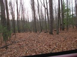 virginia mountain land 13 5 acres buffalo mountainview land for