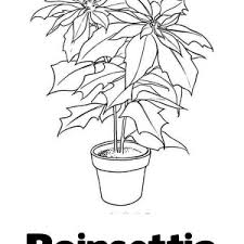 poinsettia coloring pages download online coloring pages for free part 44