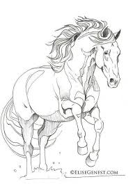 35 horse coloring pages images horse coloring