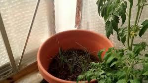 greenhouse winterizing youtube