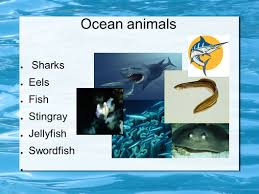 ocean biomes by drew e dixon animals of the ocean the barracuda