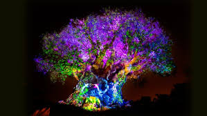 tree of nighttime awakenings animal kingdom entertainment
