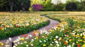 imagenes lindas naturaleza imagenes de naturaleza lindas wallpaper gratis 5 fondosmovil net