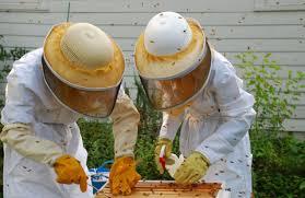 Backyard Beehive Host A Hive U2013 Heritage Acres Market Llc
