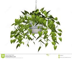 Hanging Plant Hanging Plant Isolated Stock Images Image 3828524