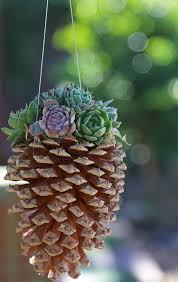 succulent planter pine cone succulent planters cool crafts the inspired home and