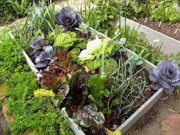 fall winter gardening in southern california winter vegetables in