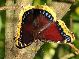 types of butterflies for butterfly identification gratography