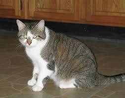 الإمساك عند القطط +وقاية +علاج Images?q=tbn:ANd9GcTHuD0Et8lkI0sgtQRzsQ6pcRTF-oJR9e2uhD85Na5x3dyNjffSVQ
