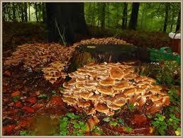 K Hen In Angebot Der Steinpilz Wetter Und Pilze Im Nordwestlichen Mecklenburg