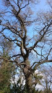 free images tree nature branch blossom wood leaf flower