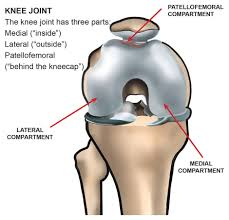 Knees Anatomy What Are The Parts Of The Knee Joint Systems4knees