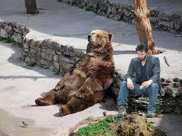 sad bear gets some company meme guy