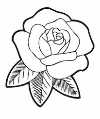 coloring endearing easy roses drawings rose outline
