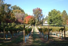 visit annapolis thanksgiving farm winery