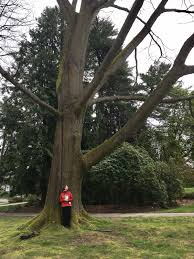 in witness tree seattle times writer lynda mapes explores