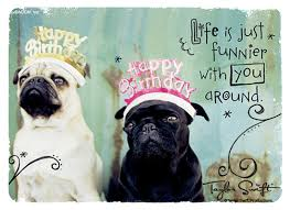 Happy Birthday Pug Meme - happy birthday pug happy birthday cute funny quotes pinterest