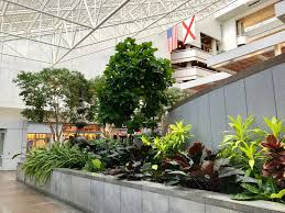 corporate u0026 commercial interior plant services interiorscapes