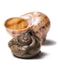 basil fed snails mikuni wild harvest