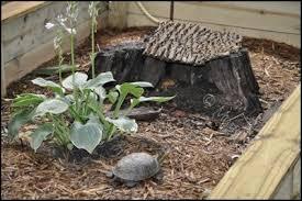 box turtle habitats indiana turtle care