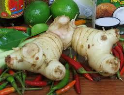 galangal cuisine fresh galangal importfood