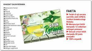 Teh Rerama khasiat daun rerama nothing to somethings