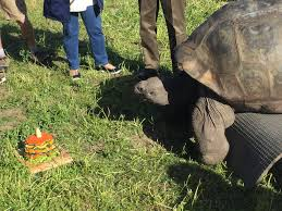 100 year old tortoise at san diego zoo sent to toledo kpbs