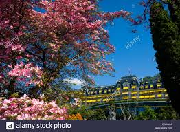 Tree House Home by Montreux Switzerland Canton Vaud Blossoming Tree House Home Hotel