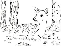 fawn coloring pages chuckbutt com