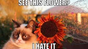 Good Grumpy Cat Meme - game review despite its name grumpy cat s worst game ever is solid