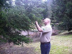arborist wikipedia