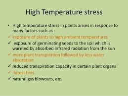 High Heat Plants Molecular Basis Of Plant Resistance To Abiotic Stresses Like High Tem U2026
